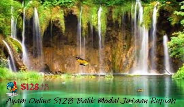 Ayam Online S128 Balik Modal Jutaan Rupiah